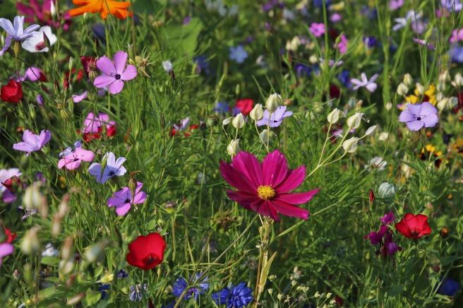 wildflowers-3571119_1920