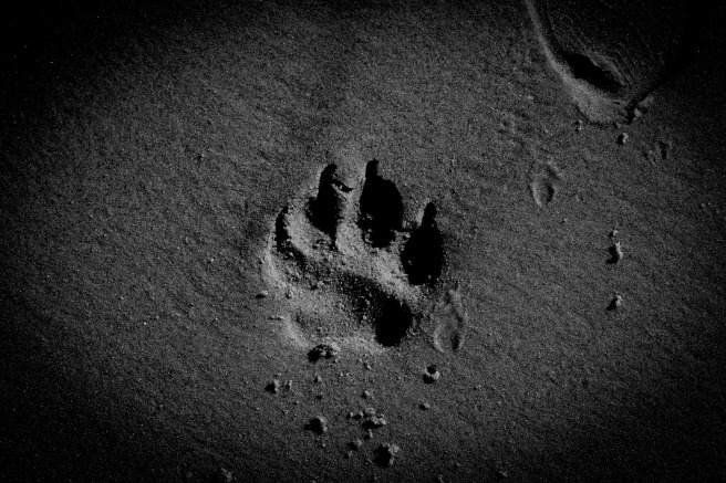 dog-paw-1575029_1920